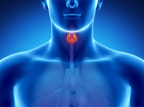 Thyroid diet healthy foods to help you eliminate thyroid problems. Thyroid symptoms if found early, can be easily avoided. No more thyroid disease.